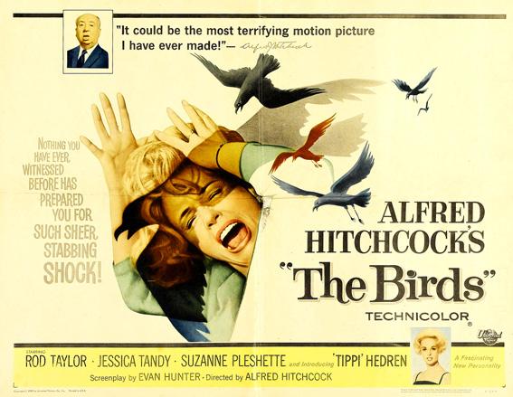 birdsquestion